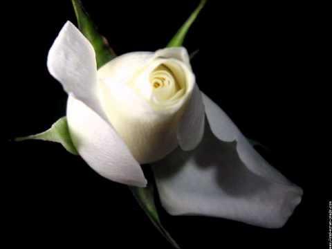 Kimo youtube - Chambre blanche et rose ...