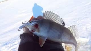 Рыбалка в первый день зимы Окунь и чебак на балансир