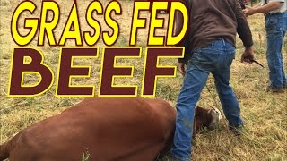 Repeat youtube video Grass Fed Beef Slaughter