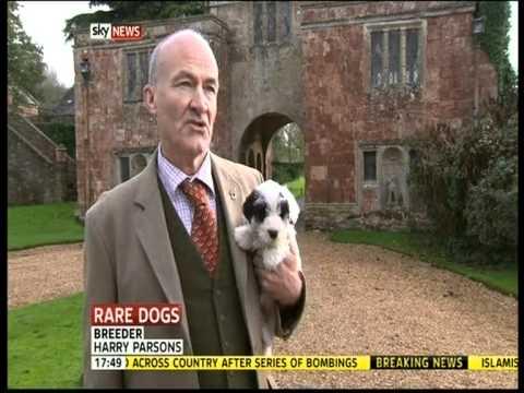 Sealyham Terrier Sky News Special Report
