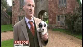 Sealyham Terrier Sky News Special Report
