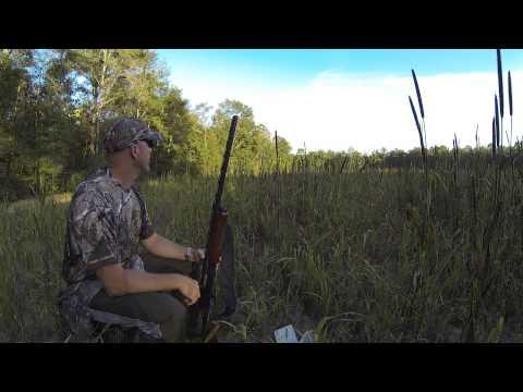 Dove Hunting In Florida