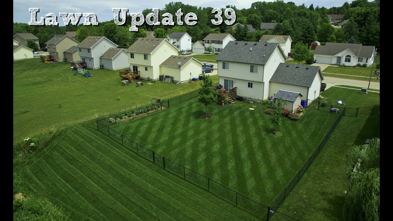 lawn update 39 - full day of