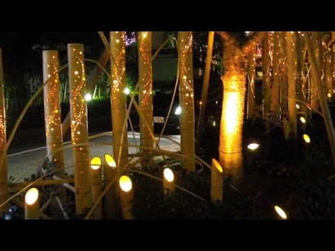 Festival of Bamboo Lights - Japan HD 2014