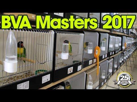 BVA Masters 2017  Lovebird International
