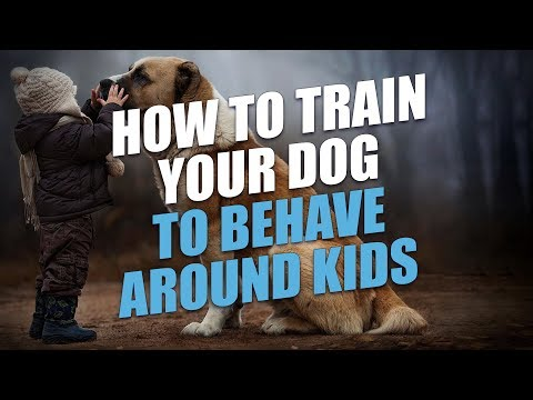 How To Train Your Dog To Behave Around Kids