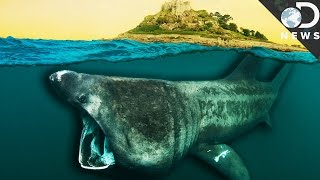 What Did Sharks Look Like 450 Million Years Ago?