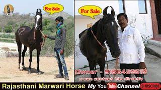 Horse Marwar…