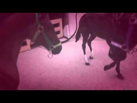 Breyer Music Video - Love club-