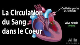 Der Umlauf des Blutes in das Herz, Animation.