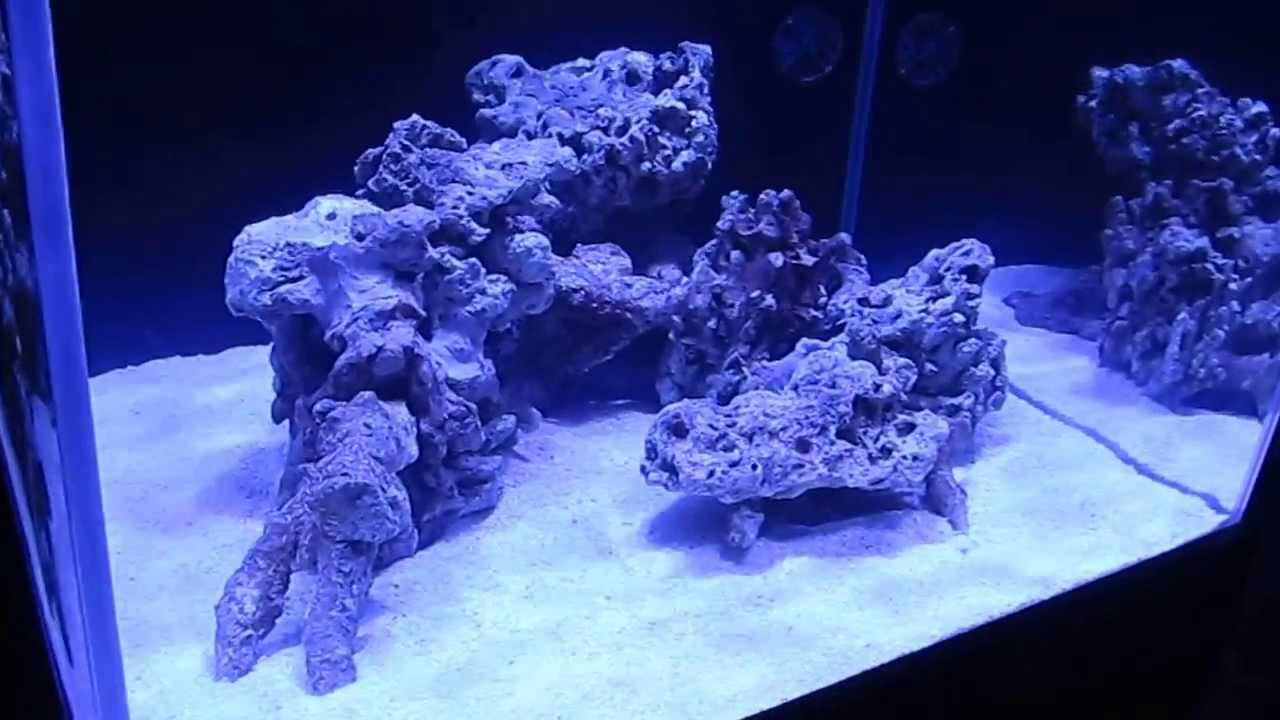 Reef Aquascaping Ideas