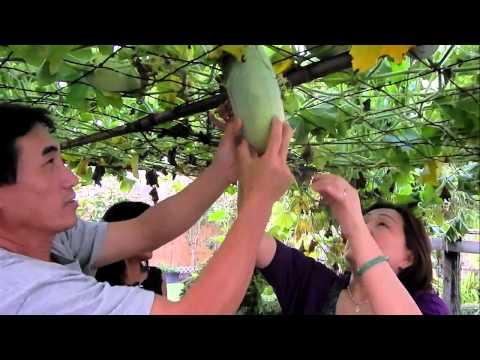 Vườn Cây   Người Việt Houston nhà Chú Thím Phi