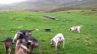 High on a hill-side in Mid-Wales.....the CVB have two blistering da...
