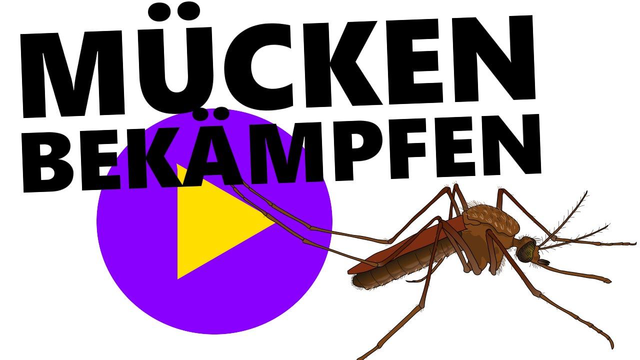 Mücken bekämpfen - Tipps gegen Mückenstiche! - YouTube