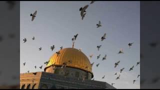 اغنيه عن فلسطين.  لن نرحل.  تحيا فلسطين. Palestina song
