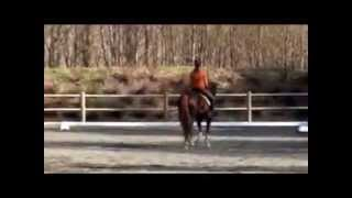 Alexandra Andresen and Belamour freestyle 2014