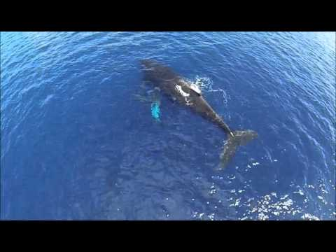 Alii Nui Drone Whale Watching
