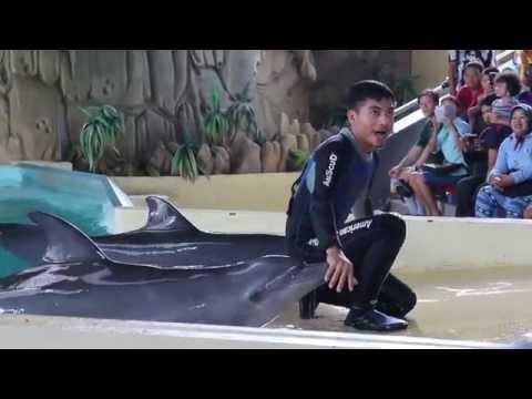 Samudra Ocean Dream Dolphin Show, Jakarta, Indonesia