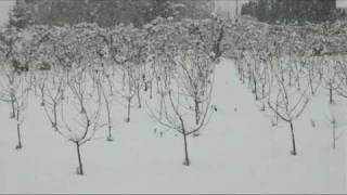 Winter Samba  - kajé x gakchu