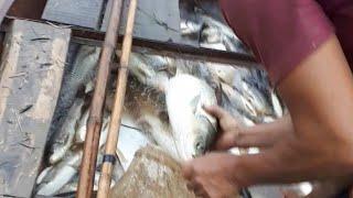 Kích cá lợi phát-Thực tế kích cá 3000g cá nổi và hút cá-Bán kích cá / xiệt cá lh 0395721438