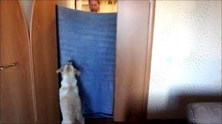 Неожиданно! исчезновение хозяина! Реакция собаки! 23.07.2018 Labrador Jesse