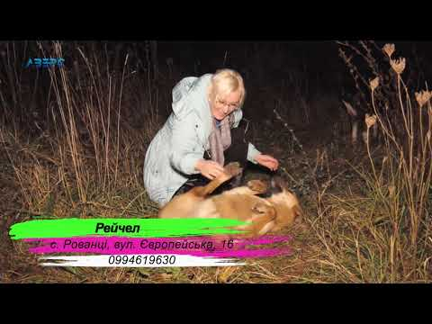 ТРК Аверс: Візьми тварину у родину Рейчел