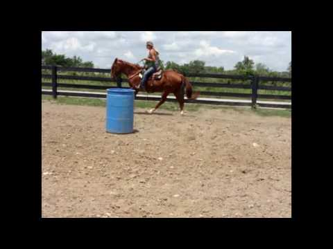SORREL QUARTER HORSE GELDING, BREAKAWAY ROPE, TEAM ROPE, RUN BARRELS, TRAIL RIDE 304-238-4155