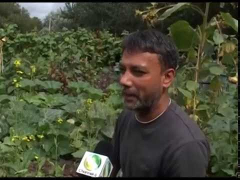British Bangladeshi Cultivating vegetable in London city