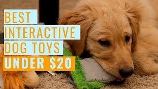 Best Interactive Dog Toys (Under $20)