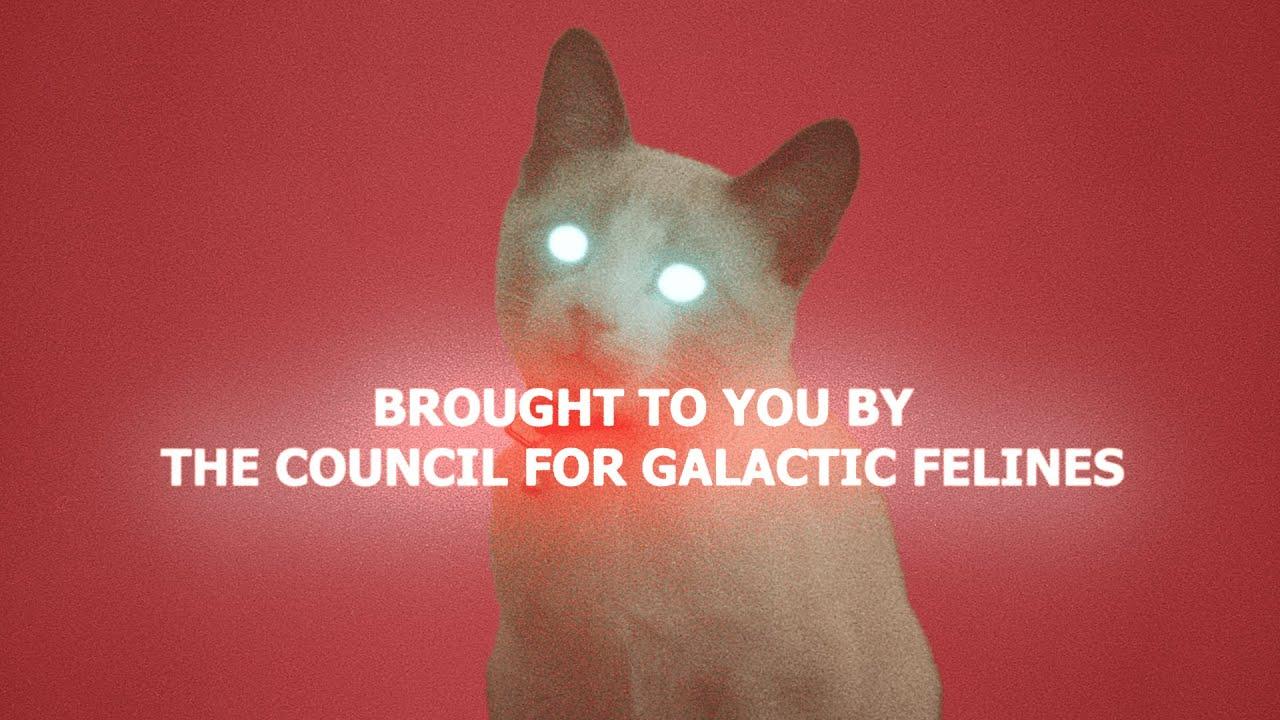 Cosmic Kitty | My RØDE Reel 2020