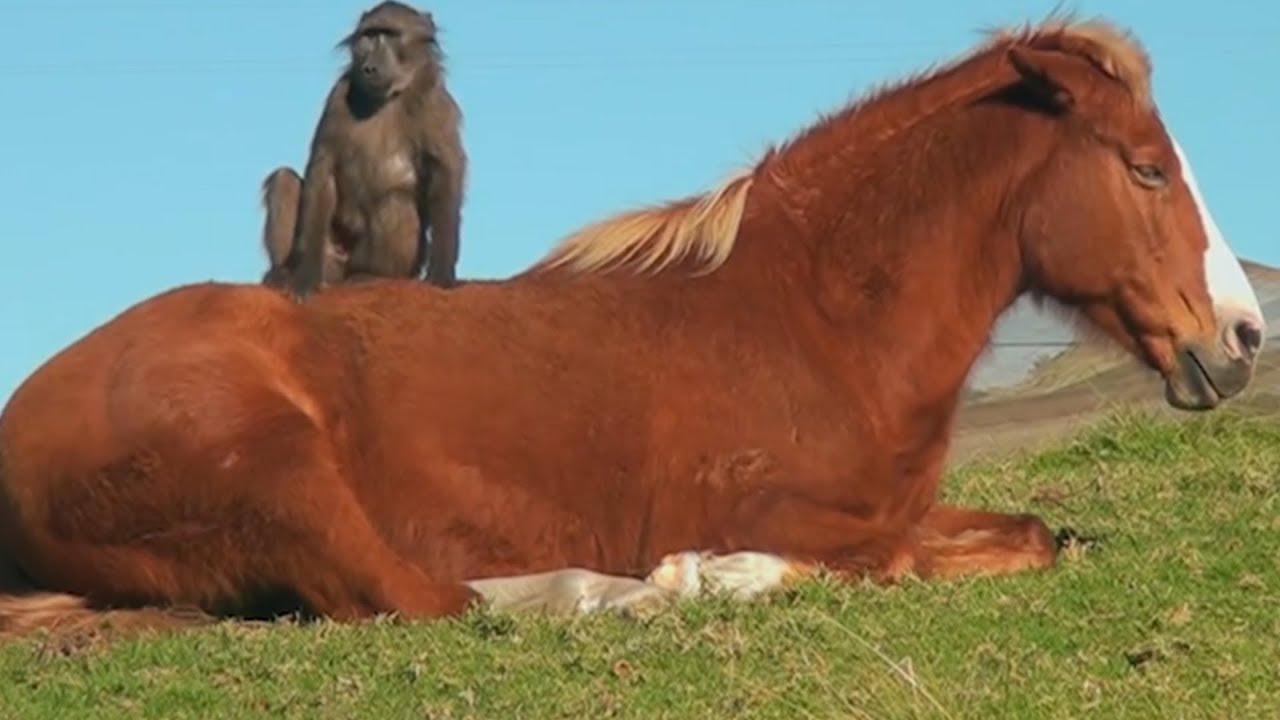 Ein Affe Und Ein Pferd