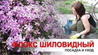 видео Секреты успешного выращивания бруннеры в саду: посадка и уход