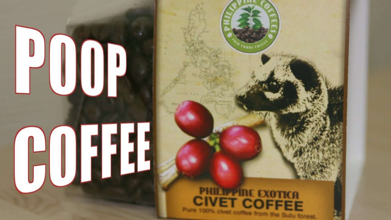 Cat Poop Coffee Youtube