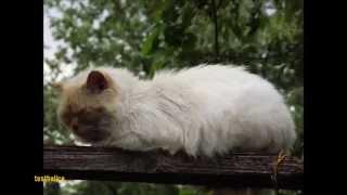 Елецкие коты 2015 Коты Елец