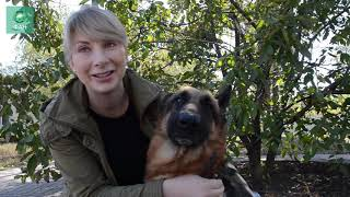 «Собакам все равно, под каким флагом случилась беда»: приют «ПИФ» в Донецке спасает жизни