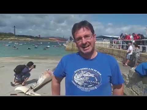 Pablo Covelo, del Cemma, habla sobre la ballena aparecida en San Cibrao