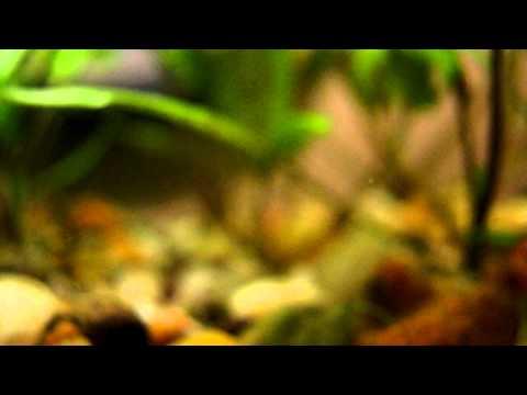 Aquarium Fish HD