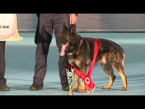 2 / INTERNATIONAL HUNDEUDSTILLING / DOG SHOW 2018 / HERNING / 3. NOVEMBER