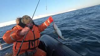 Рыбалка в Баренцевом море 02 05 2020