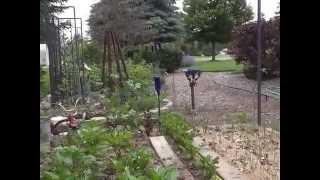 Organic Raised Veggie & Herb Beds - Lasagna Gardening Method
