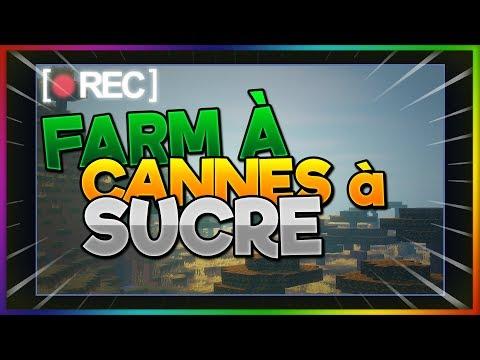 [Deira Network] CONSTRUCTION D'UNE FARM A CANNES A SUCRE