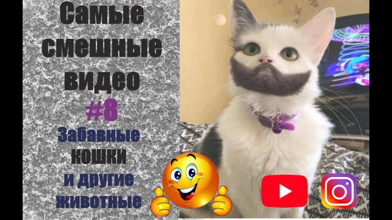 Смешные Кошки 2019/Смешные Животные/Приколы про Котов/Приколы с Животными/Смешные Видео/Ржач до Слез | Смотреть Онлайн Смешные Ролики Животных