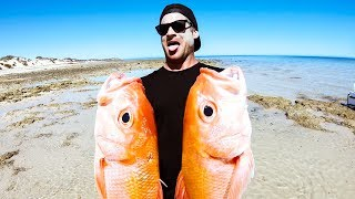 GIANT FISH IN A CLEAR WATER PARADISE Camp Fire Catch And Cook - Ep 121