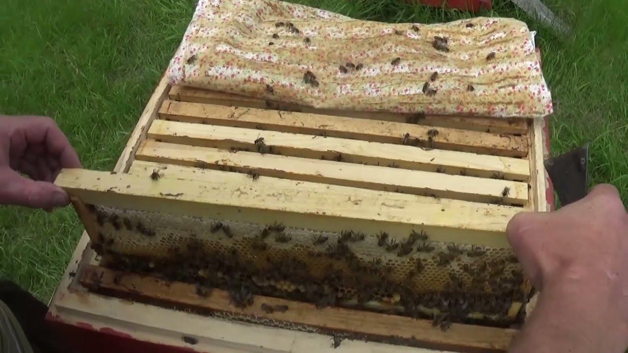 Срочное расширение пчёл перед главным медосбором!