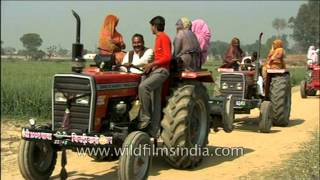 Villagers pimping ride on tractors in Uttar Pradesh