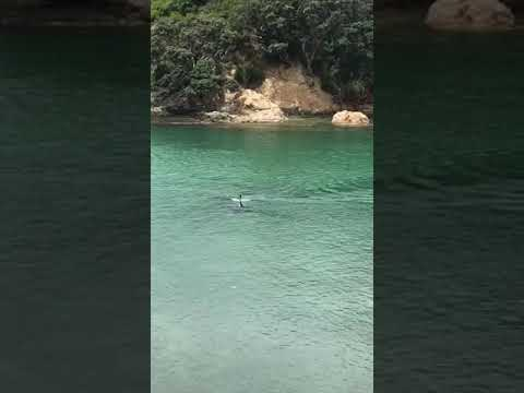 Two orca swim past some kids in New Zealand