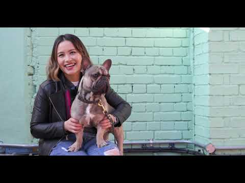 Dogs of Instagram – a mini dogumentary