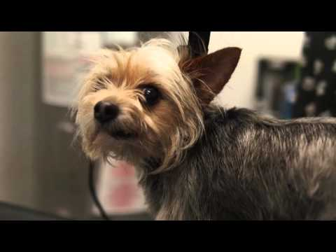 Splash and Dash for Dogs - Franchisee Testimony