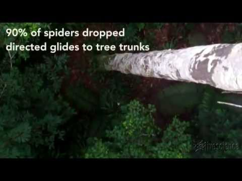Detect spiders ' fly ' first in the world