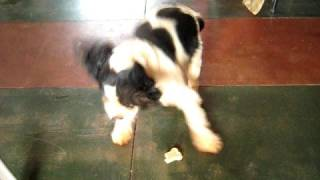 Dog Treat Dance By Leo  Please Rate!!!!